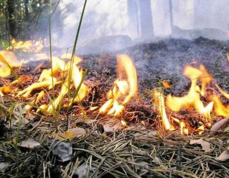 Опале листя з мікрорайонів Кропивницького вивозитимуть за графіком