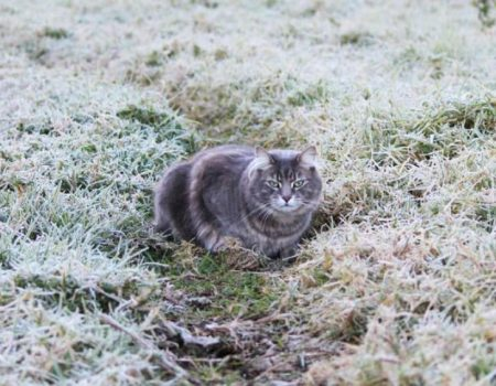 На Кіровоградщині очікуються заморозки