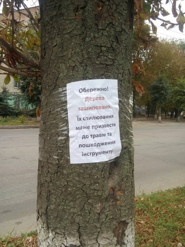 «Навколо «Червоної зірки» відбувається якась туйня» - дерева, які хочуть зрубати, «заговорили». ФОТО Фото 5 - Події - Без Купюр - Кропивницький