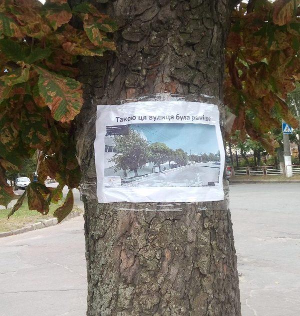 «Навколо «Червоної зірки» відбувається якась туйня» - дерева, які хочуть зрубати, «заговорили». ФОТО Фото 4 - Події - Без Купюр - Кропивницький