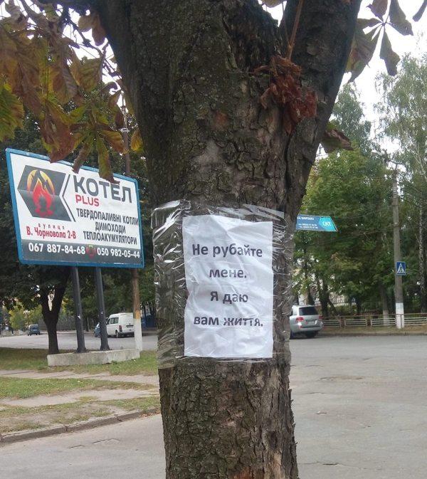 «Навколо «Червоної зірки» відбувається якась туйня» - дерева, які хочуть зрубати, «заговорили». ФОТО Фото 3 - Події - Без Купюр - Кропивницький
