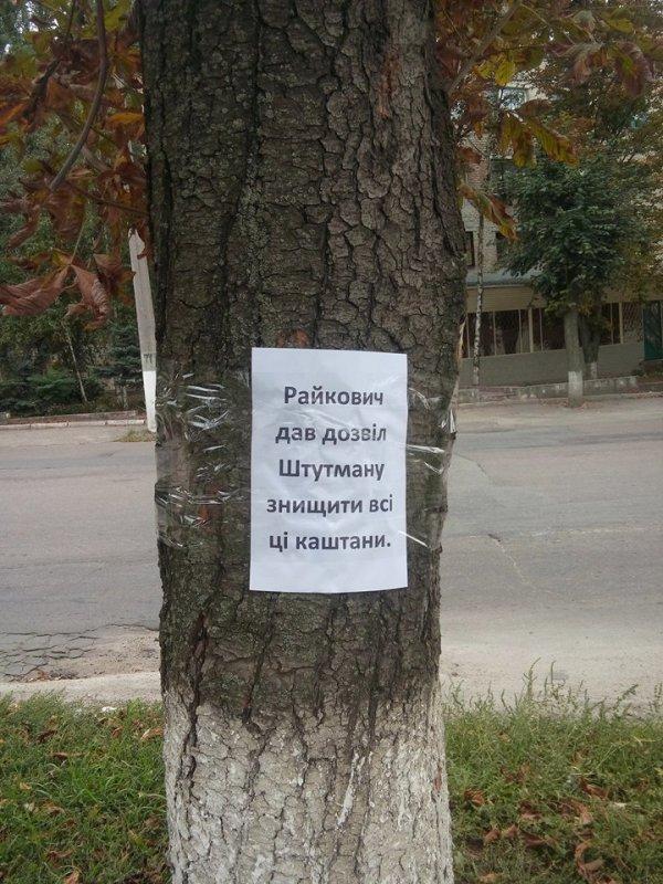 «Навколо «Червоної зірки» відбувається якась туйня» - дерева, які хочуть зрубати, «заговорили». ФОТО Фото 1 - Події - Без Купюр - Кропивницький