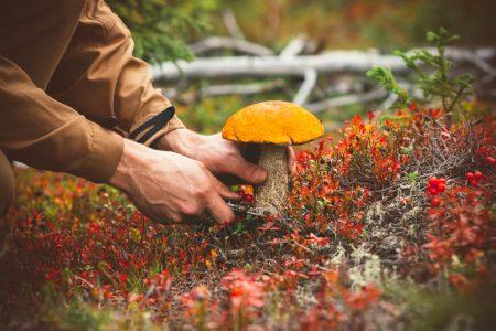 Троє мешканців Кропивницького отруїлися грибами