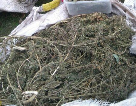 Поліція вилучила у жителя Кропивницького 28 пакетів марихуани. ФОТО