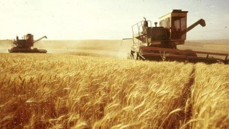 Двоє підприємців з Кіровоградщини отримали відзнаку «Заслуженого працівника сільського господарства»