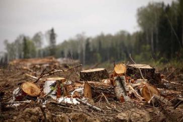 Двоє жителів області незаконно вирубали дерев на півмільйона гривень