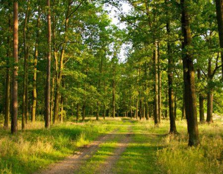 Питання про передачу лісу на Кіровоградщині депутату від «БПП» виключили з порядку денного