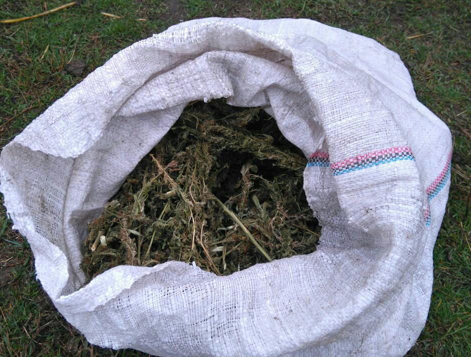 Поліція вилучила у жителя Кропивницького 28 пакетів марихуани. ФОТО Фото 2 - Події - Без Купюр - Кропивницький
