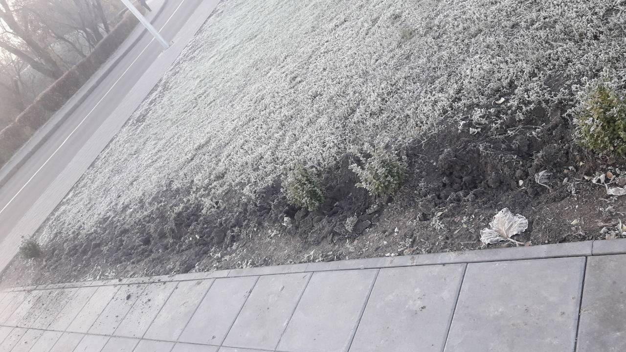 Без Купюр У Кропивницькому вже вдруге викопали кущі самшита біля пам'ятника жертвам Голодомору. ФОТО Життя  правопорушення Кропивницький