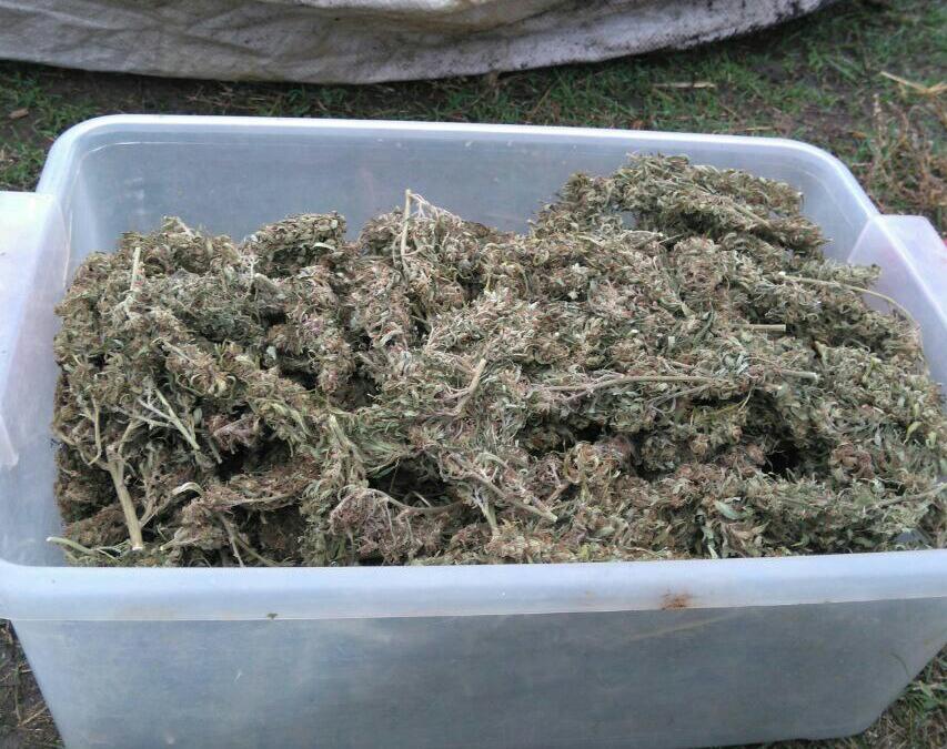 Поліція вилучила у жителя Кропивницького 28 пакетів марихуани. ФОТО Фото 1 - Події - Без Купюр - Кропивницький