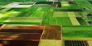 На Кіровоградщині в приватного підприємства відібрали землю, яку він отримав на користь сільгосппідприємства