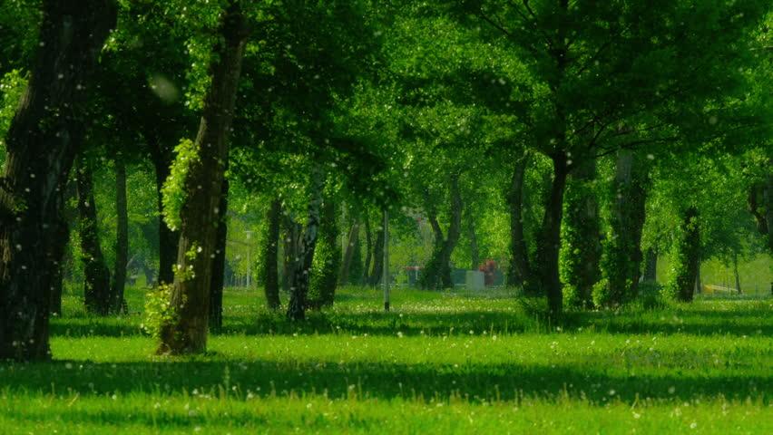Без Купюр Кропивницький www.kypur.net - Позитив - Помста дерев Фотографія 3
