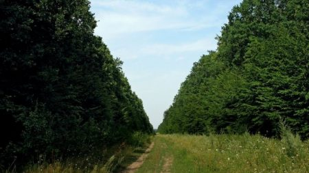 Кропивницький відділ Українського географічного товариства закликає владу зберегти Чорний ліс