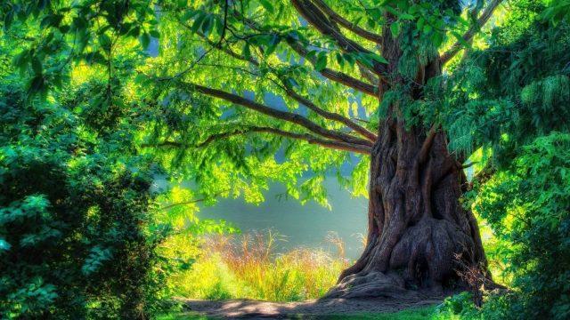 Помста дерев