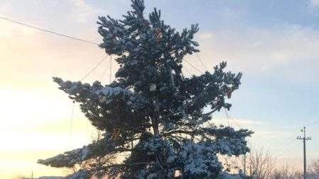 У Гайвороні чиновники не поділили відкриття новорічної ялинки. ФОТО