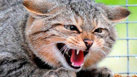 У Кропивницькому у безпритульного кота виявили сказ, одну людину направили на щеплення
