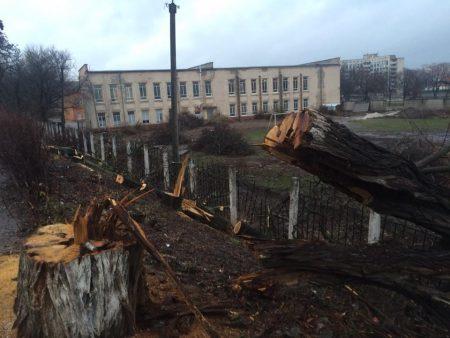 Кропивницька активістка розробила пам'ятку, як боротися з дроворубами, які нищать дерева в обласному центрі