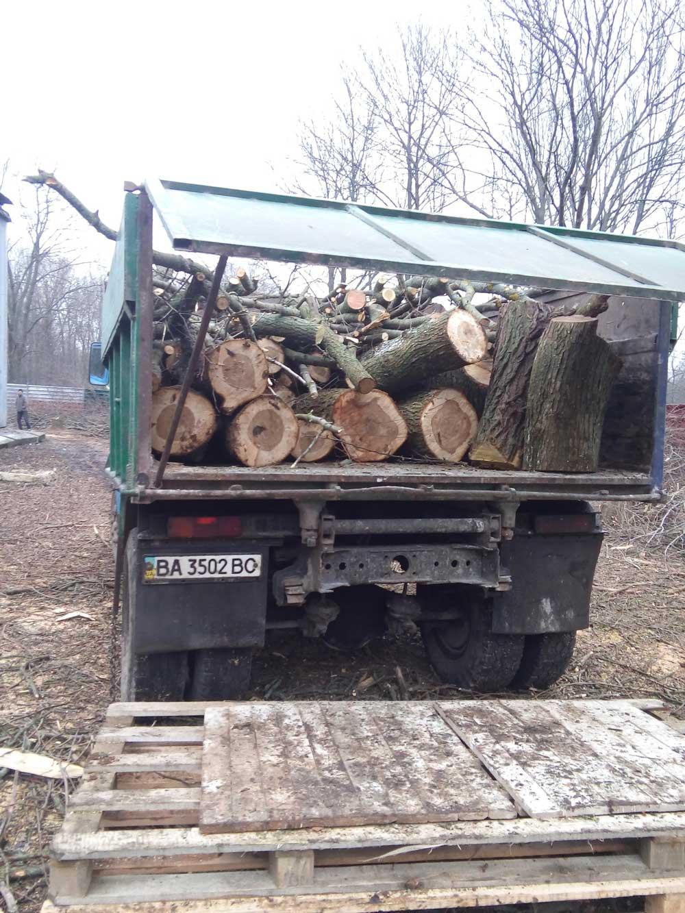 Без Купюр У кропивницькому Дендропарку спиляли 55 дерев. ФОТО Життя  Кропивницький зрубані дерева Дендропарк