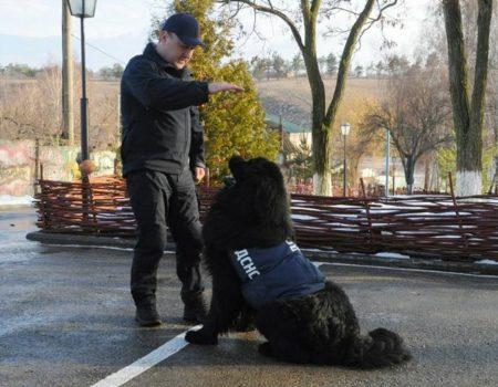 В ДСНС Кіровоградщини розповіли про своїх «колег» – службових собак-рятувальників. ВІДЕО