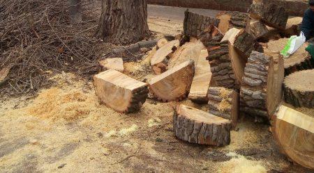 Одне посадили – чотири спиляли: кропивницька активістка пропонує вести статистику знищених щомісяця дерев