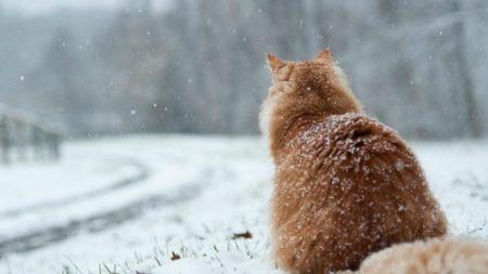 Синоптики прогнозують на завтра мокрий сніг у Кропивницькому