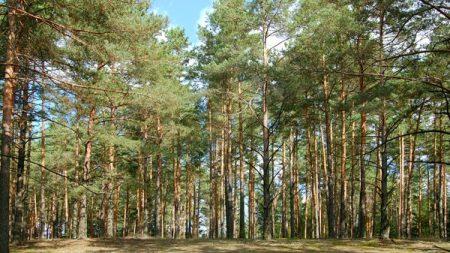 Заступник міського голови Кропивницького: Межі Лісопарку затвердять цього року