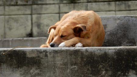 Скільки у Кропивницькому коштує стерилізація та перетримка одного безпритульного собаки
