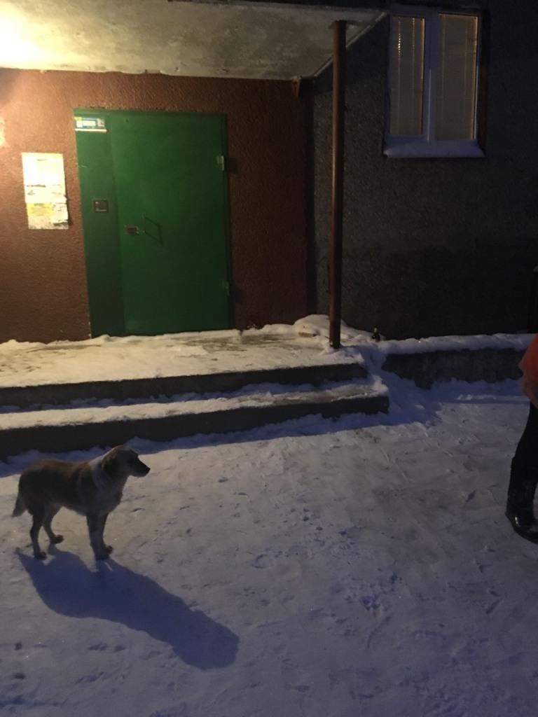 Де у Кропивницькому всю ніч і ранок розчищали дороги. ФОТО - 15 - Події - Без Купюр