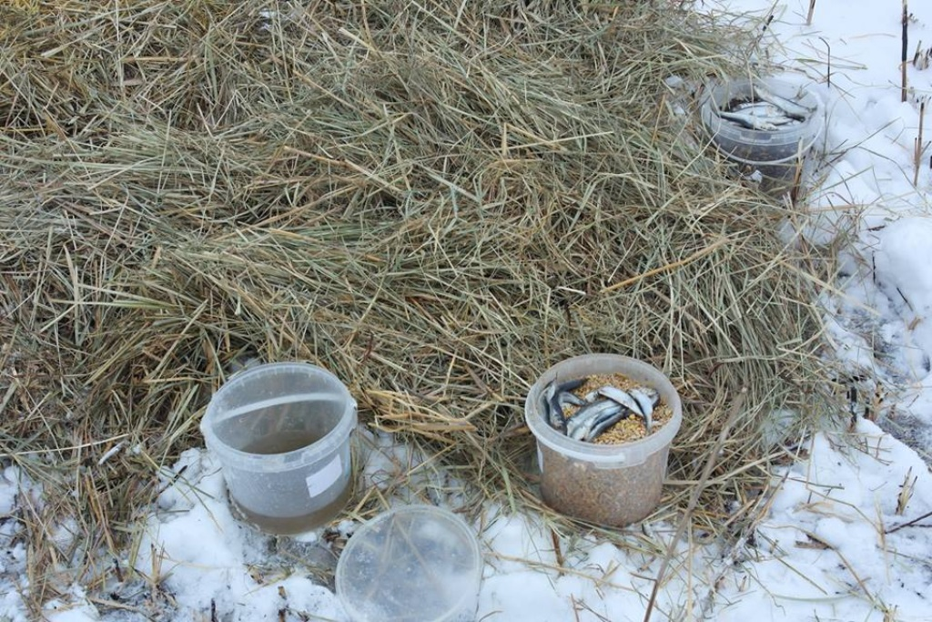 У Новій Празі люди допомагають лелекам пережити холодну весну. ФОТО - 3 - Життя - Без Купюр