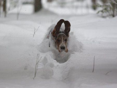 У Кропивницькому просять врятувати зі снігового полону 180 собак ветеринарно-реабілітаційного центру