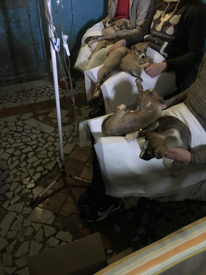 """У притулку для тварин """"БІМ"""" епідемія ентериту, волонтери просять про допомогу. ФОТО - 4 - Фото - Без Купюр"""
