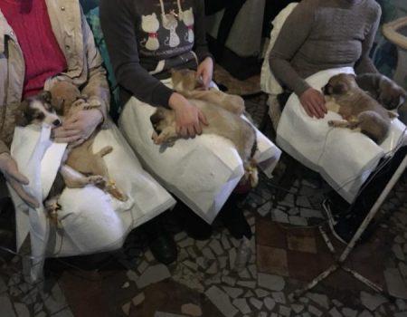 """У притулку для тварин """"БІМ"""" епідемія ентериту, волонтери просять про допомогу. ФОТО"""