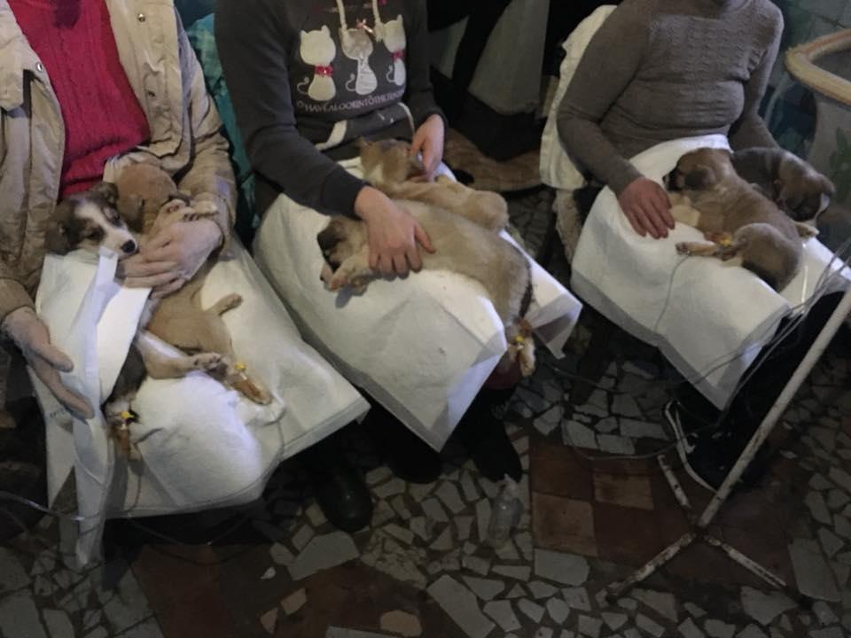 """У притулку для тварин """"БІМ"""" епідемія ентериту, волонтери просять про допомогу. ФОТО - 6 - Фото - Без Купюр"""