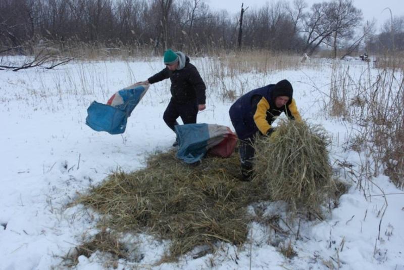 У Новій Празі люди допомагають лелекам пережити холодну весну. ФОТО - 1 - Життя - Без Купюр