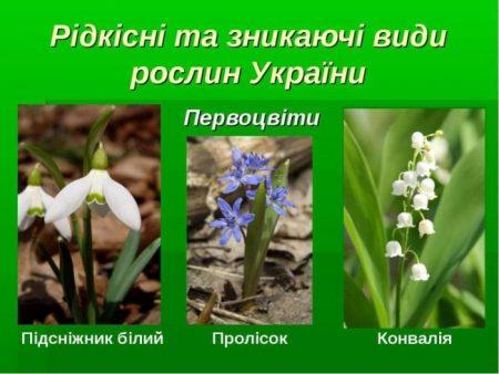 Департамент екології закликає повідомляти про торгівлю ранньоквітнучими рослинами на Кіровоградщині