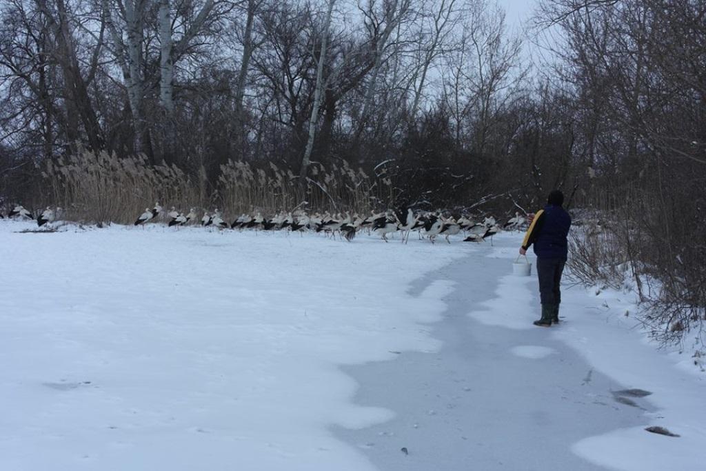 У Новій Празі люди допомагають лелекам пережити холодну весну. ФОТО - 2 - Життя - Без Купюр