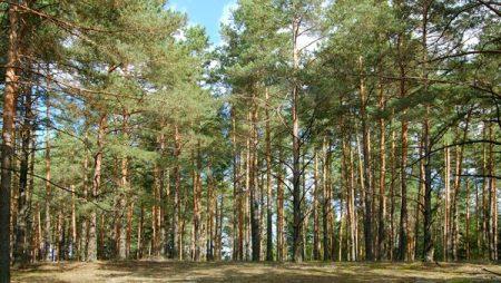Громадськість Кропивницького може розповісти про проблему Лісопарку в НАБУ