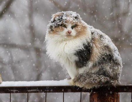 Завтра на Кіровоградщині очікується сніг та ожеледь