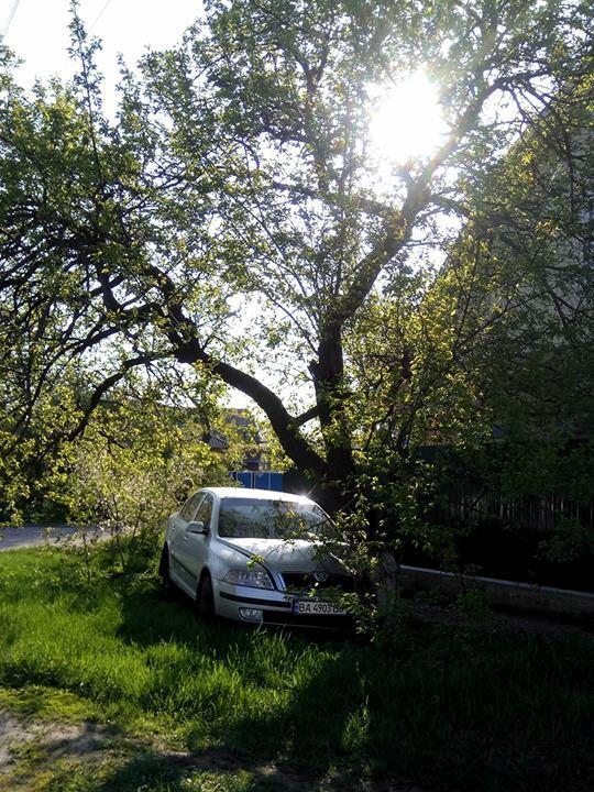 У Кропивницькому Skoda Octavia в'їхала в дерево. ФОТО, ВІДЕО - 1 - Події - Без Купюр