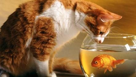 На Кіровоградщині заборонили вилов риби і раків