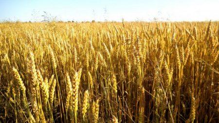 Рейдерство на Кіровоградщині: як за один день сантехнік став директором агропідприємства