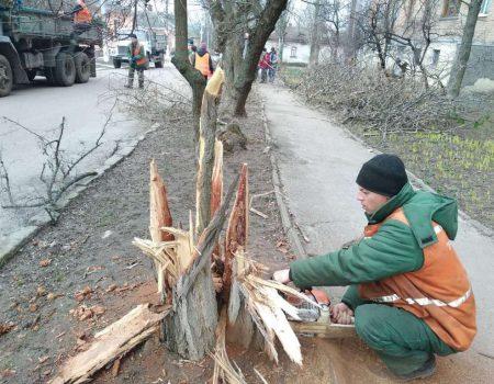 Міський голова Кропивницького доручив комунальникам знести аварійні дерева
