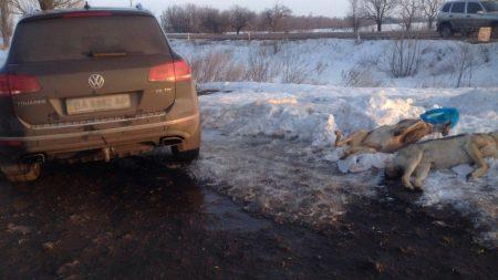 У Кропивницькому оскаржуватимуть штраф у 2 тисячі гривень за вбивство козулі і вовків. ФОТО