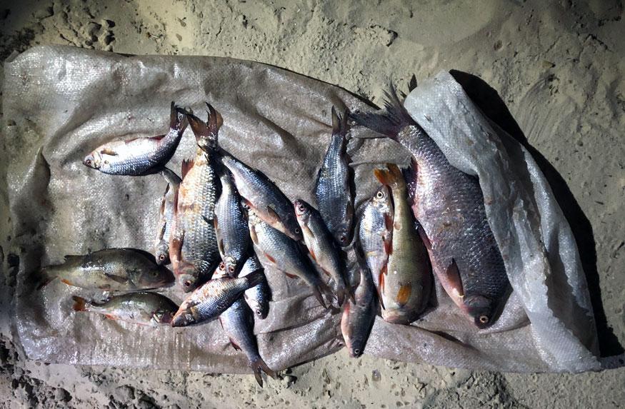 Без Купюр Порушник незаконно добув 213 кг риби у Кременчуцькому водосховищі Кримінал  рибоохорона рейд Кіровоградщина