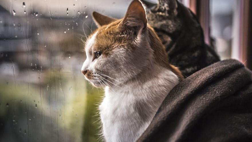 Без Купюр На Кіровоградщині сьогодні очікуються сильні зливи Життя  штормове попередження Укргідрометцентр Кіровоградщина зливи