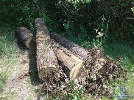 """На Кіровоградщині поліцейські викрили """"чорних лісорубів"""", які знищили дубів на мільйон гривень"""