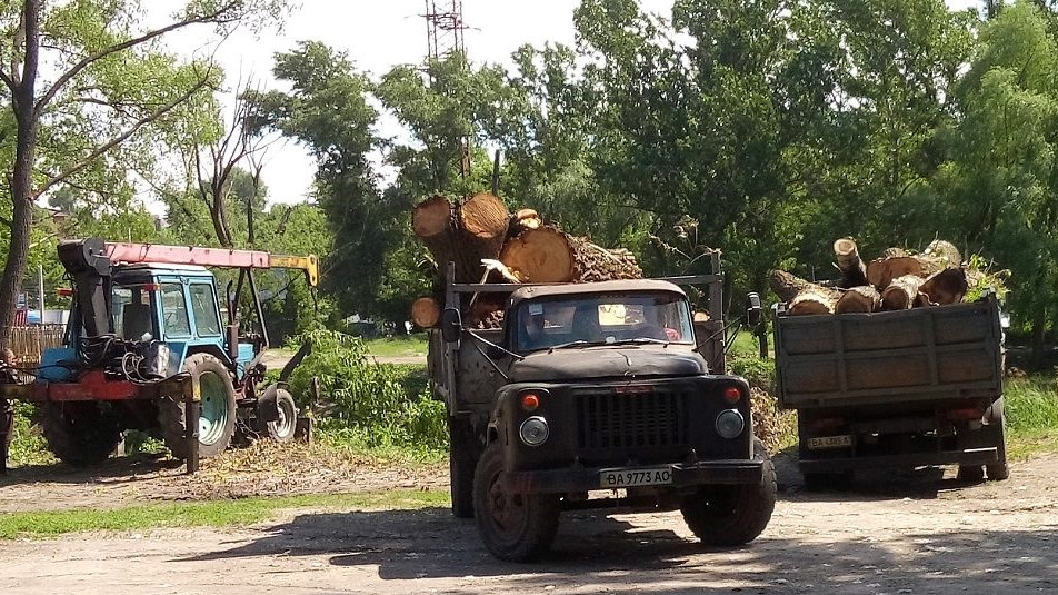 Без Купюр У Кропивницькому влада задекларувала обіцянку пояснювати екоактивістам доцільність обрізки дерев Життя  озеленення Кропивницький вирубка дерев