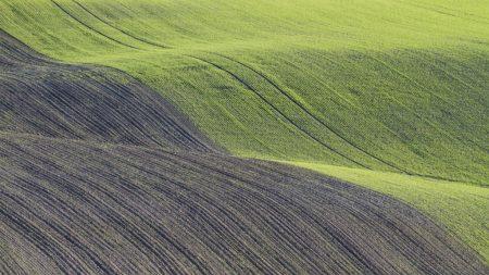 На Кіровоградщині завершили посів ярих зернових
