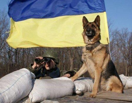 Виставку службових порід собак проведуть у Кропивницькому