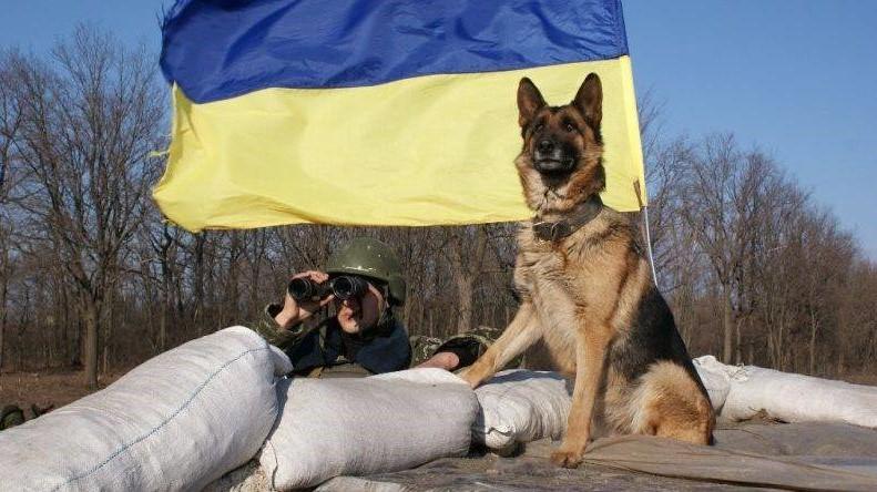 Без Купюр Виставку службових порід собак проведуть у Кропивницькому Життя  Кропивницький виставка службових собак